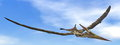 Pteranodon dinosaur - 3D render Royalty Free Stock Photo
