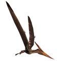 Pteranodon on White Royalty Free Stock Photo