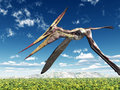 Pterosaur Pteranodon Royalty Free Stock Photo
