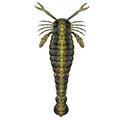 Pterygotus Silurian Scorpion Royalty Free Stock Photo