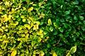 PUBLIC DOMAIN DEDICATION digionbew 10. june july 29-06-16 Hedge surface LOW RES DSC03536
