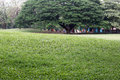 Public park with green grass field and perspective to copy space Royalty Free Stock Photo