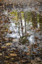 Puddle authumn reflection of trees in a with fallen leaves Royalty Free Stock Images