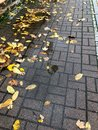 A puddle of leaves on the footpath Royalty Free Stock Photo