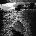Puddles of water with tree reflections sunlight on muddy ground after the rain black and white Royalty Free Stock Image