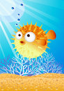 Puffer fish Stock Photography