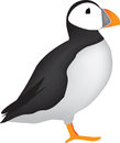 Puffin illustration on white background colour of the side view of a standing Royalty Free Stock Photography