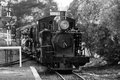 Puffing billy train steam trains comes to a stop in melbourne victoria australia Stock Photography