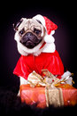 Pug dog Stock Photo