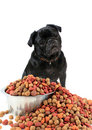 Pug and dog food Royalty Free Stock Photography