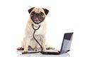 Pug dog isolated on white background doctor mit laptop Royalty Free Stock Photo
