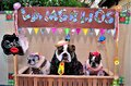 Fun of dogs dressed as rednecks in the free kissing booth `Lambeijos` Royalty Free Stock Photo