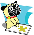 Pug peeing Stock Images
