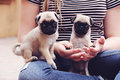 Pug puppies teeny tiny little girl holding Royalty Free Stock Photography