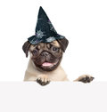 Pug puppy with hat for halloween peeking from behind empty board. on white Royalty Free Stock Photo
