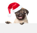 Pug puppy with red christmas hat looking at camera from behind empty board. isolated on white background Royalty Free Stock Photo