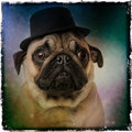 Pug wearing a top hat on grunge colored background Royalty Free Stock Image