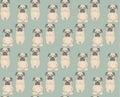Pugs meditation yoga pattern cute dogs vector seamless Stock Photography