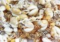 Puka Shells Royalty Free Stock Photo