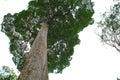 Pulau Ubin Royalty Free Stock Photo