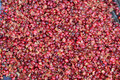 Pulping The Coffee Berry Royalty Free Stock Photo