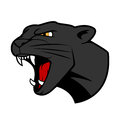 Puma head with bared teeth aggressive or panther in cartoon style for tattoo or t shirt print design Royalty Free Stock Image