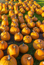 Pumkin fram Royalty Free Stock Photos