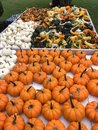Pumpkins, Squash And Gourds