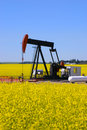 Pump jack in canola field Royalty Free Stock Photo