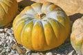 Pumpkin As Decoration For Autu...