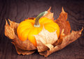 Pumpkin on an autumn dry maple leaves Stock Image