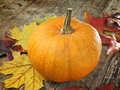 Pumpkin with autumn leaves Stock Images