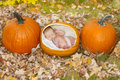 Pumpkin baby cute concept image of a growing in a patch in the fall Stock Images
