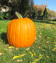 Pumpkin big orange on the grass Royalty Free Stock Photos