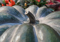 Pumpkin close up green pumpkin side view gourd fragment close up squash background sinderella Stock Photos