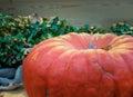 Pumpkin close up orange pumpkin side view gourd fragment close up squash background sinderella Royalty Free Stock Photography