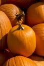 Pumpkin closeup Royalty Free Stock Photo