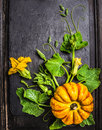 Pumpkin composition with stems leaves flowers and small fruits on dark background top view Royalty Free Stock Image