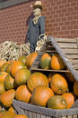 Pumpkin Display Royalty Free Stock Images