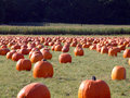 Pumpkin field 2 Royalty Free Stock Photo