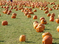 Pumpkin field 4 Stock Photography