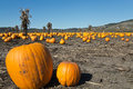 Pumpkin field after harvest Royalty Free Stock Photos