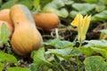 Pumpkin Flower Garden Autumn S...