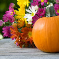 Pumpkin and flowers Stock Image