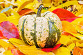 Pumpkin in the garden in the fall leaves decorative pumpkins on autumn red and yellow Stock Photography