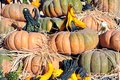 Pumpkin and gourd outdoor harvest decoration with Stock Image