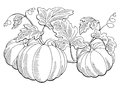 Pumpkin graphic bush plant black white isolated sketch illustration