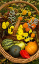 Pumpkin and green apple red pepper and yellow flowers autumn harvest Royalty Free Stock Image