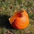 Pumpkin half eaten by deer a halloween on lawn Royalty Free Stock Image
