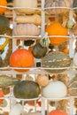 Pumpkin harvest season on the shelves farm pile of organic farm Stock Photo